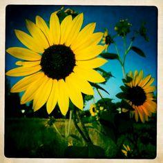 """""""No coração de quem faz a guerra nascerá uma flor amarela, como um Girassol!"""""""