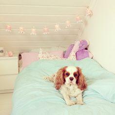rosy bedroom ♡