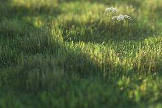 Grass Part 2 - Peter Guthrie