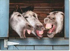 Funny donkey birthday cards 3 donkeys laughing funny birthday card greeting card by Smiling Animals, Laughing Animals, Happy Animals, Cute Funny Animals, Funny Animal Pictures, Animals And Pets, Funny Donkey Pictures, Donkey Funny, Beautiful Horses