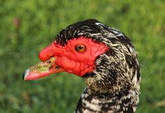'Quite special goose?' by irio Birds, Animals, Animales, Animaux, Bird, Animal Memes, Animal, Animais, Dieren