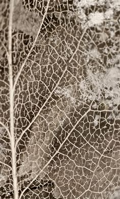 New Ideas For Nature Texture Pattern Fractals Organic Forms, Natural Forms, Natural Texture, Patterns In Nature, Textures Patterns, Organic Patterns, Leaf Patterns, Nature Pattern, Leaf Skeleton