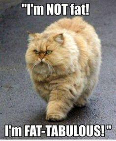 i'm not FAT! | Cat Meme