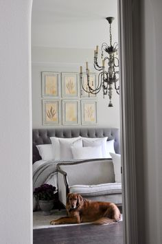 Beautiful gray and white bedroom with large chandelier