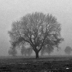Δέντρο στην ομίχλη και στην παγωνιά -3