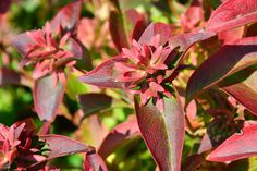 13 octobre 2015 - 101463456156729422200 - Picasa Albums Web Albums, Photos, Nature, Plants, Gardens, Picasa, October, Pictures, Naturaleza