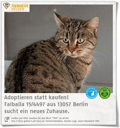 Falballa kam als freilegende Katze ins Tierheim Berlin.  http://www.tierheimhelden.de/katze/tierheim-berlin/ekh/falballa_154497/10315-1/  Falballa sucht katzenerfahrene Halter, die die nötige Geduld mitbringen. Aktuell ist Streicheln insbesondere bei fremden Personen nich drin. Leckerli nimmt sie aber gut an. Ein kinderloser Haushalt mit Garten wäre ideal für sie.