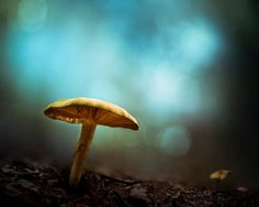 Turquoise and gold wall art, twilight mushrooms forest photography print, mystical magical enchanted fairy lights
