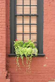 gotta love a window box