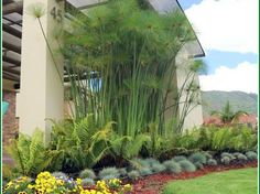 Beginner's Guide To Tropical Landscaping Design Plans – My Best Rock Landscaping Ideas Tropical Landscaping, Modern Landscaping, Tropical Garden, Backyard Landscaping, Landscaping Ideas, Privacy Plants, Landscape Design Plans, Yard Design, Dream Garden