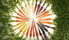 Torta De Legumes Sem Glúten Com Cenoura   ➡️ https://segredodefinicaomuscular.com/receita-fit-de-torta-de-legumes-sem-gluten-pratica-rapida-e-deliciosa/  Se gostar da receita compartilhe com seus amigos :)  #receitasfit #receita #recipe #fit #receitafit #torta #EstiloDeVidaFitness #ComoDefinirCorpo #SegredoDefiniçãoMuscular