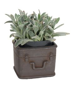 Another great find on #zulily! Small Rustic Luggage Planter #zulilyfinds