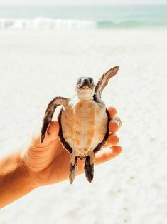 Top Dinge zu Di in Unawatuna Sri Lanka - . - Top Dinge zu Di in Unawatuna Sri Lanka Juna Rosenfeld - Cute Creatures, Beautiful Creatures, Animals Beautiful, Animals Amazing, Cute Little Animals, Cute Funny Animals, Sri Lanka, Cute Turtles, Tier Fotos