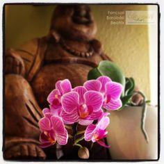 Orchideák gondozása: ne dobjuk ki elvirágzás után a csodás növényt! | Életszépítők