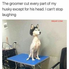 Funny Picture Of The Year 2018 ft. Funny Dog