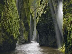 Oneonta Gorge in Portland, OR