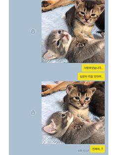 사망하셧습니다.. Animals And Pets, Baby Animals, Funny Animals, Cute Animals, Cute Stories, Big Dogs, Funny Cute, Cute Cats, Cute Babies