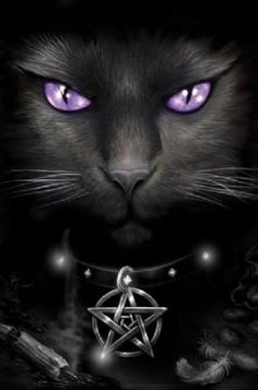 1000 Images About Fantasy Cats On Pinterest Black Cats