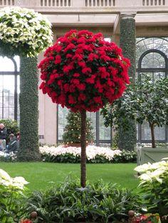 Tree of flowers - Longwood Gardens