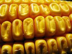 Картинки по запросу corn macro