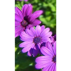 Flowers and Gardens 2 ❤ liked on Polyvore featuring purple