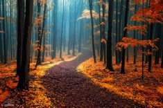As a true nature enthusiast, I love strolling through the woods taking pictures of different forest atmospheres. Therefore, I'd love to invite you to share your beautiful forest photography with me and other readers. Forest Path, Autumn Forest, Dark Forest, Autumn Fall, Autumn Nature, Forest Road, Autumn Scenery, Nature Tree, Forest Photography
