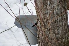 It is Maple and more at the annnual Vermont Maple Festival in downtown St. Albans. There is something for everyone!