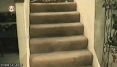 Poor cat get land on four legs. #CatsofPinterest #Catgif