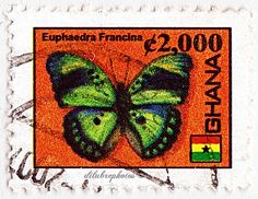 Ghana.  EUPHAEDRA FRANCINA.  Scott 2528 A504, Issued 2006, Litho., Perf. 13 1/2, 2000.