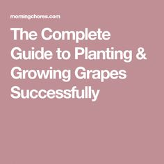 32 Best 5 images | Vineyard vines, Grape vines, Vines