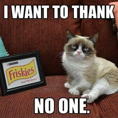"""you just gotta lover her grumpy self. grumpy cat quotes -m :: Grumpy Cat was a grumpy cat-testant on """"Will Kitty Play With It?"""" the only game show for cats. Grumpy Cat Quotes, Meme Grumpy Cat, Cat Jokes, Grumpy Kitty, Cat Humour, Cute Cats, Funny Cats, Funny Animals, Cute Animals"""