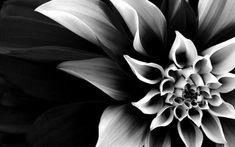 flores preto e branco fotografia (8)