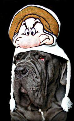 Feeling Grumpy :( Neapolitan Mastiffs, Beautiful Babies, Activities, Dogs, Pet Dogs, Doggies