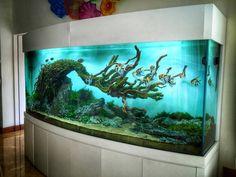 Wabi Kusa , Paludarıum , Aquascaping ,Terrarium... - Wabi Kusa , Paludarıum , Aquascaping ,Terrarium Aquarıum Setup
