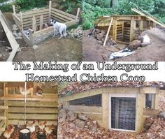 The Homestead Survival | The Making of an Underground Homestead Chicken Coop | http://thehomesteadsurvival.com