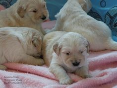 Puppies 3 weeks 1