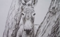 Hand sketched pencil portrait from a photo of a donkey