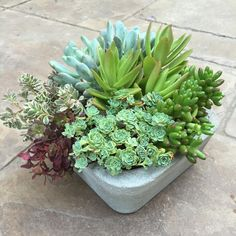 Nice succulent arrangement by Shawna Williams Ropp