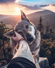 Good Boy Dog Photos is part of Funny animal photos - Honza Řeháček is freelance photographer from Czechia with a passion for nature, travel and his wolfdog Sitka He can often be found combining his 3 passions, Funny Animal Photos, Dog Photos, Dog Pictures, Funny Photos, Funny Animals, Cute Animals, Nature Pictures, Funny Cats, Pet Dogs