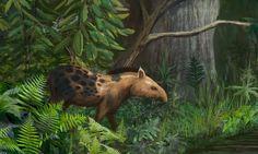 Tapirus veroensis (mamífero perisodáctilo del Pleistoceno, 0,2MA) (Stephen Moore)