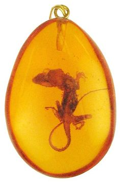'Go Big': Prehistoric lizard in amber 12 Million Years Old