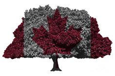 Canadian Flag On Isolated Tree Digital Art by Image World
