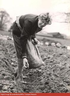 A worker in the Women's Land Army, or a 'land girl' as they were often called, poses whilst planting potatoes at London Transport Gardens at Brockley Hill. These vegetables would have been destined for London Transport staff canteens. The W.L.A. was involved in all aspects of agricultural work including ploughing, driving tractors, harvesting, threshing, herding cows and other livestock as well as working in market gardens. --  WWII propaganda photograph (Great Britain, UK), 1941.