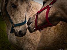 Horses in Love, Pedro Cl
