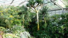 Botanischer Garten ~ Erlangen, Bayern, Germany