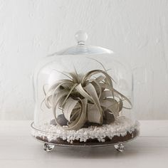 Footed Cloche Terrarium