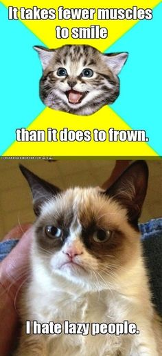 Grumpy cat quotes, funny grumpy cat, grumpy cat jokes …For more funnies and hilarious jokes visit www.bestfunnyjokes4u.com