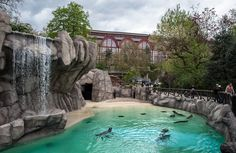 The Antwerp Zoo - an institution and righteously so. Right next to the central station in the middle of the city, beautifully landscaped, a great escape from the hustle and bustle