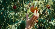 """Call Me By Your Name Directed by Luca Guadagnino Cinematography by Sayombhu Mukdeeprom """"""""Nature has cunning ways of finding our weakest spot. Call Me By, Images Esthétiques, Movies And Series, Italian Summer, Northern Italy, Your Name, Film Stills, Looks Cool, Vsco"""