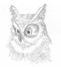 Hermes the Screech Owl sketch